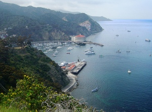 Catalina Island, CA, USA.